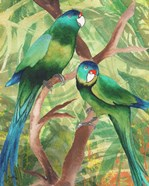 Tropical Birds II