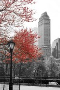 Central Park with Red Tree