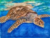 Turtle at Sea