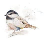 Watercolor Mountain Bird II