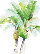 Watercolor Banana Plantain