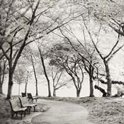 Virginia Park Walk