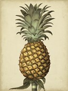 Brookshaw Antique Pineapple I