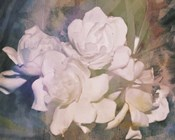 Blush Gardenia Beauty I