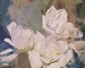 Blush Gardenia Beauty II