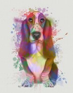 Basset Hound Rainbow Splash