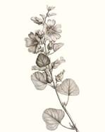 Neutral Botanical Study I