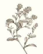 Neutral Botanical Study II