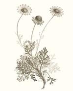 Neutral Botanical Study VIII