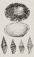 Charcoal & Linen Shells III