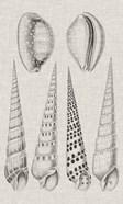 Charcoal & Linen Shells VI