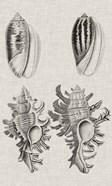Charcoal & Linen Shells VII