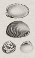 Charcoal & Linen Shells VIII