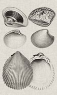 Charcoal & Linen Shells IX