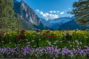Wildflowers In Banff National Park