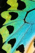 Wing Pattern Of Tropical Butterfly 5
