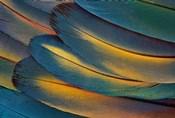 Scarlet Macaw Wing Feathers Fan Design