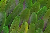 Green Wing Feathers Of A Parrot