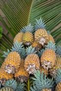 Kingdom Of Tonga, Vava'u Islands, Pineapples