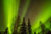 Alaska Aurora Borealis Over Forest