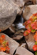 Small Waterfall In The Sierra Nevada Mountains