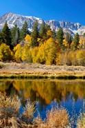 Yosemite's Mount Dana