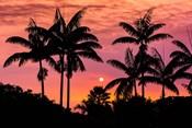 Sunset Through Silhouetted Palm Trees, Kona Coast, Hawaii