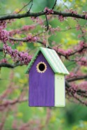 Bird House In Eastern Redbud, Marion, IL