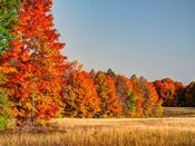 Fall Colors Of The Hiawatha National Forest