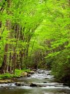 Straight Fork River, North Carolina
