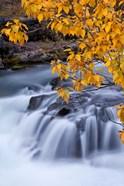 Rogue River Waterfalls In Autumn, Oregon