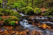 Autumn Color Along Starvation Creek Falls In, Oregon