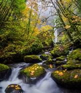 Mccord Creek In Autumn, Oregon