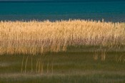 Grasses Blowing In The Breeze Along The Shore Of Bear Lake, Utah