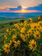 Landscape With Douglas' Sunflowers In The Palouse Hills