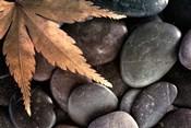 Zen Maple Leaf On Rocks