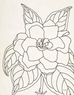 Gardenia Line Drawing Crop