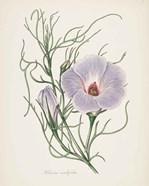 Antique Botanical XXX Cream