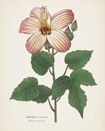 Antique Botanical XXVII Cream