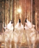 Three Wolf Howl
