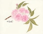 Bashful Blossoms