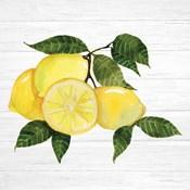 Citrus Garden VI Shiplap