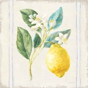 Floursack Lemons I Sq Navy