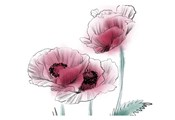 Sketched Poppies 1