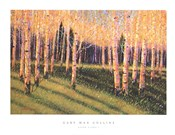 Aspen Light (Left)