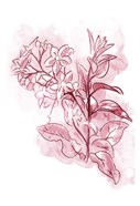 Water Inked Florals Blush