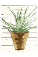 Wood Plant Pot