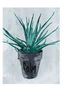 Calm Plant