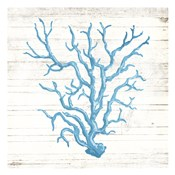Coral On Wood