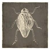Bug Life One